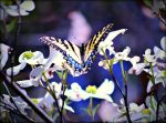 Butterfly In The Park by 6to9Nature