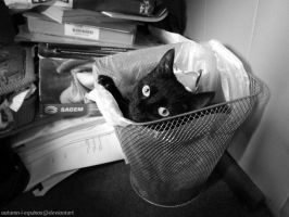 Cherry in the bin - bw by autumn-I-equinox