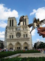 Birds of Notre Dame by BlackCarrionRose