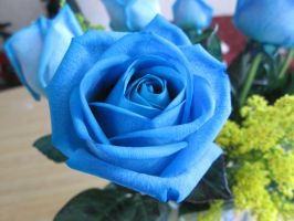 blue rose 4 by unread-story