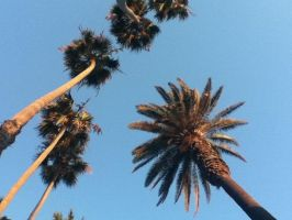 Palm Trees by SwimmerGirl96