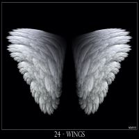 24 - Wings by Brigitte-Fredensborg