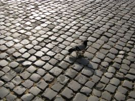 lone pigeon on cobblestone by ColorfulDragon