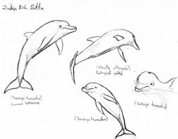 Dolphin sketches 1 by amorousdino