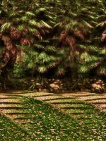 Autumn Paths by Tigles1Artistry