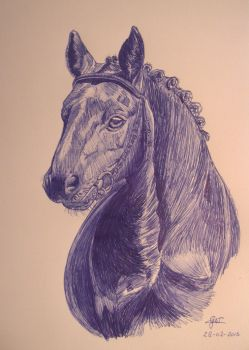 Horse by GwendolynWolters
