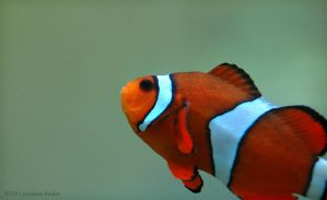 Everybody Loves A Clownfish by JonShotFirst