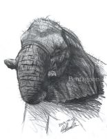 Elephant study by Noukah
