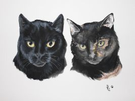 Again ... cats by Nyotah