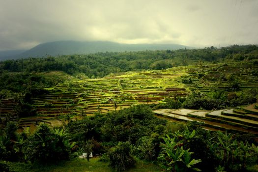 Paddy Terrace by Destroth