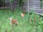 Fawns in the Meadow 5 by Windthin