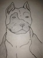 Pitbull head by Ceri19