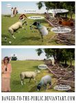sheep disco by danger-to-the-public