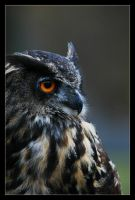 Eagle Owl V by Schoelli