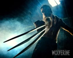 Wolverine Ready To Attack by Wolverine080976