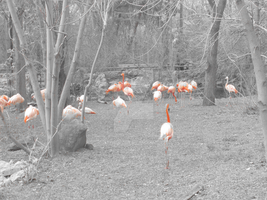 Flock of Flamingos by RussianGentleman