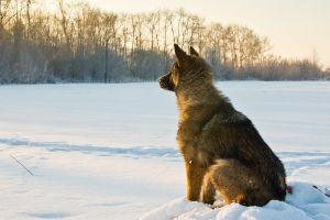 Waiting in a Snow by Sulde