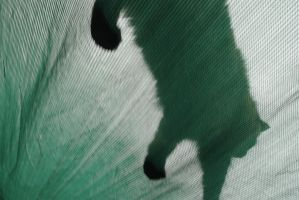 cat attack by jaismith