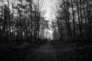 The Trail Ahead by NOS2002