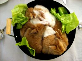Cooking some rabbits.. by Dakita
