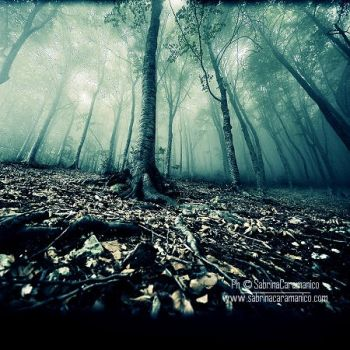 .Silent Trees II. by sabbbriCA