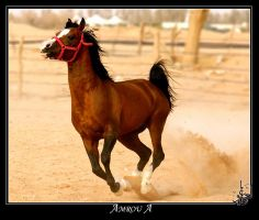 Arabian brown horse by AMROU-A