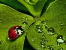 Lady Bug HDR 2 V2 by CharlesWb