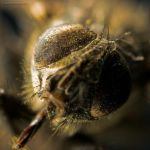 Dirty Fly II by cutterfield