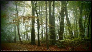 Fairyland, not far from here. by Miarath