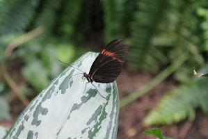 Butterfly 3 by Ezekeil42
