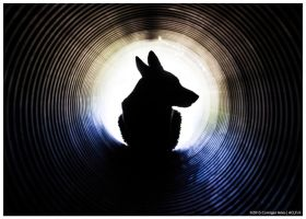 Bond Dog Bond by corniger-aries