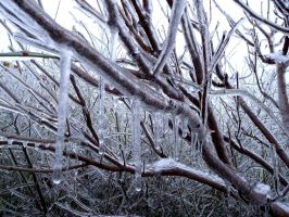 Ice Tree by Fliu