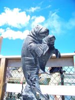 Manatee Statue by hollybolly95