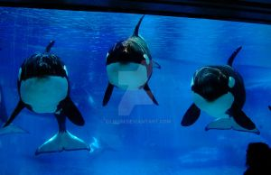 We are the young by Tilikum