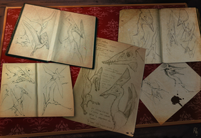 Pterosaur sketches by Rhynn