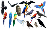 bird bird bird PNG format by Chimonk