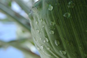 rain drops 1 by AngelicPicture