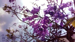 Purple Flowers by MichaelNN