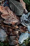 Touch of Frost24 by Coigach