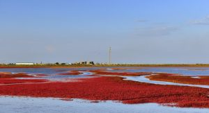 Red Seashore, Liaoning, China n DSC1872w by laogephoto
