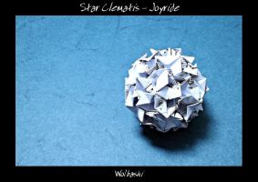 Star Clematis - Joyride by wolbashi