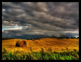 Harvest by maxwas