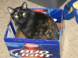 A box of beer..OH..thats Tiki by Sylverkitti