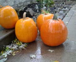 pumpkins by Bordomgirl5