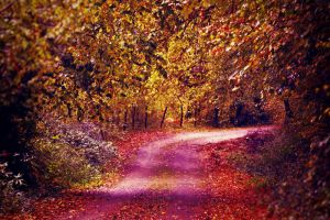 Golden Path by LuizaLazar