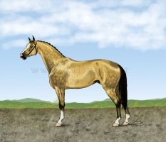 Buckskin by caligis