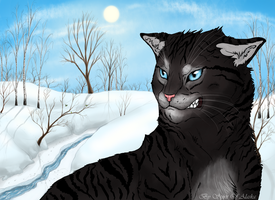 Hawkfrost by Spirit-Of-Alaska