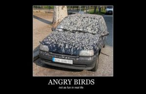 Angry Birds... by XMordecaiRigbyX