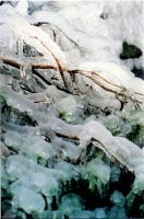 icy branches by kairanie