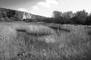 Cliffe and Reeds 2213 by filmwaster